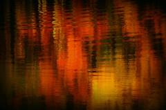 Lake Walnut Point Reflection (forestforthetress) Tags: lake autumn reflections centralillinois walnutpoint walnutpointstatepark walnutepointlake color outdoor omot nikon google flickr tourism