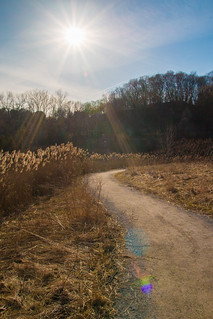 Sunny Spring Path