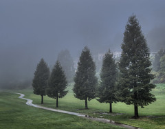 Shall We (Steve Gumina Photography) Tags: scenic landscapes moody paths trees fog