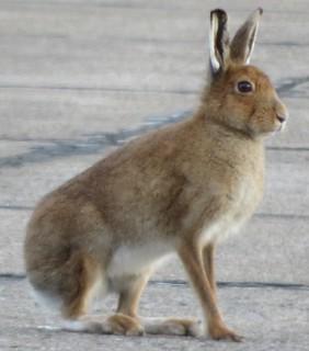 Easter Hare 2018 Ho! Ho! Ho!