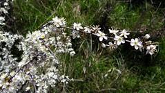 El espectáculo de la Naturaleza. (Caty V. mazarias antoranz) Tags: nature naturaleza flores flowers multicolor colorido colores primavera verdor espectáculonatural sorprendente asombroso mágico luminoso