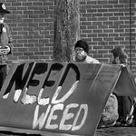 Need Weed thumbnail