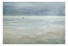 Chasing Birds (angeladj1) Tags: llynpeninsular northwales blackrocksands seascape textures
