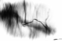 the shadows of memory (Neko! Neko! Neko!) Tags: blackandwhite blackwhite bw mono monochrome memory dream subconsciousness abstract abstractionism expression expressionism