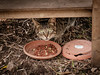 Paxoit Cat (Rupert Brun) Tags: 2016 greece greek holiday ionian paxos cat paws feed feeding station eat eating food hide hiding shy scared