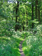 Into the Forest (The-Beauty-Of-Nature) Tags: spring may mai nature germany deutschland sun sunny sonne sonnig plants pflanzen light licht forest woods wald lush green grün