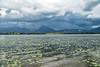 Gewitterstimmung mit Hopfensee (stefangruber82) Tags: alpen alps tirol tyrol bavaria bayern gewitter storm lake clouds wolken