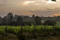 Vigneti a La Morra_Y3A9253 (candido33) Tags: barolo lamorra paesaggidelvino piemonte serradenari alba aurora filari vigne vigneti vitigni