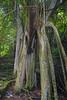 Trunyan Village Graveyard, Pohon ......, Bali 1 (Petter Thorden) Tags: bali indonesia kintamani lake gunung batur trunyan