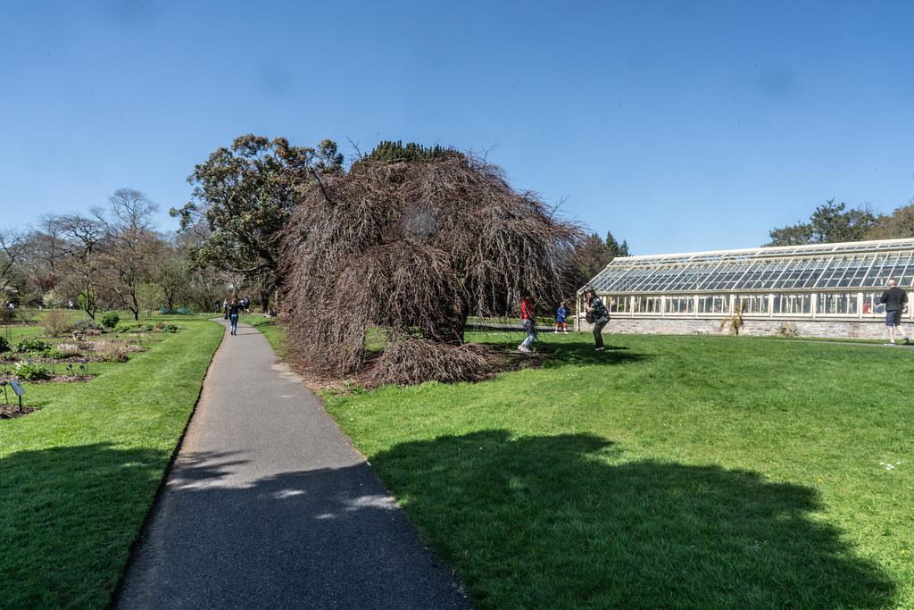 VISIT TO THE NATIONAL BOTANICAL GARDENS [GLASNEVIN DUBLIN]-138525