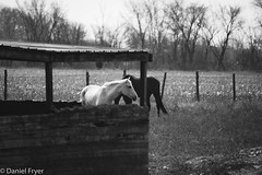 Framed (danfryer2) Tags: spring barn monochrome nature mono lady horse blackandwhite nikond7200