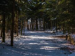 Winter im Waldpark (Tobias Keller) Tags: 43 bavaria bayern deutschland donauries germany heimat huisheim landschaft schnee schwaben swabia waldpark weitwinkel weitwinkelkonverter winter home landscape geocountry exif:make=panasonic geocity exif:isospeed=160 geostate geo:lon=10709087366667 geolocation camera:make=panasonic camera:model=dmcg5 exif:lens=lumixgvario1442f3556 exif:aperture=ƒ80 geo:lat=48828055933333 exif:model=dmcg5 exif:focallength=39mm lumixgvario1442f3556 panasonicdmcg5