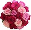 Mixed roses (Flowers by Moonstones - Fareham Florist) Tags: wedding weddingflowers bridalflowers bridalbouquet weddingbouquet flowersbymoonstones flowers florist moonstones farehamflorist fareham rose pink cerise red