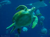 Atlanta Aquarium_6638 (smack53) Tags: smack53 aquarium atlanta atlantaaquarium georgia fish shark turtle canon powershot sx150is canonpowershotsx150is blue water aquaticlife allgodscreatures creatures animals