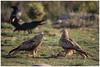_LUN4570-1 (josemiguellunaromero) Tags: animales naturaleza