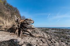 20180330-IMG_9220 (dr_knox) Tags: objekt ort baumwurzel fa himmel ostsee steilküste strand wurzel