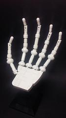 Skeleton Hand (Thietmaier) Tags: lego anatomy biology skeleton hand
