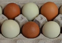 What is Easter without Eggs (suenosdeuomi) Tags: eggs santafe farmersmarket nm activism organicnongmofood questionableusdastandards 2018 usa