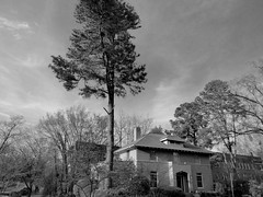 tall conifer tree, architecture, sky, Durham, NC, Panasonic Lumix DMC-ZS50, 4.2.18 (steve aimone) Tags: talltree conifer architecture sky lumixdmczs50 panasonic blackandwhite monochrome monochromatic durham northcarolina