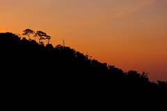 Minca on Fire (yotam.fogelman) Tags: fujifilm xt20 mirrorless nature outdoors landscape colombia trees forest jungle sunset dusk silhouette
