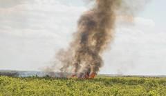 Everglades Brushfire (ACEZandEIGHTZ) Tags: fire nikon d3200 everglades florida us41 tamiami trail flames wildfire smoke alligator alley