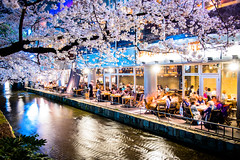 sakura '18 - cherry blossoms #7 (Kiyamachi, Kyoto) (Marser) Tags: xt10 fuji raw lightroom japan kyoto kiyamachi river flower cherry sakura restaurant nightview longexposure 京都 木屋町 高瀬川 桜 夜桜