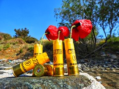 guns and poppies (panoskaralis) Tags: poppies red flowers wildflowers yellow blue bullets decoration decor sky bluesky green nature outdoor macro guns lesvos lesvosisland mytilene greece greek hellas hellenic