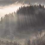 Forest of Light thumbnail