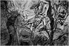 Wild Waters :: ([JBR]) Tags: eau agua water rio riviere gardon stjeandugard gard cevennes reflet reflect reflejo tree arbre arbol branches branchages noir negro black blanc blanco white grey mono filter infraredfilter filtreinfrarouge abstrait abstract abstracto patterns jbrphoto jbrphotography pentax 2018 55 555 5 natureza nature natural light texture r