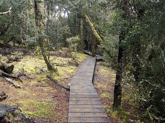 Enchanted forest (Baractus) Tags: john oates cradle mountain national park tasmania australia enchanted walk inala nature tours