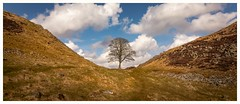 Sycamore Gap, Northumberland (urfnick) Tags: canon eos 1300d nature sycamore history roman clouds blue