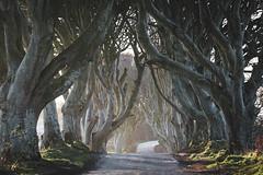 The Dark Hedges, Northern Ireland (Sunny Herzinger) Tags: trees fujixpro2 northernireland xf1655mm ballymoney ireland romantic ballycastle beech february road travel thedarkhedges light armoy unitedkingdom gb