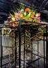 2018-03-10_7466arrange (lblanchard) Tags: 2018flowershow floral arrange