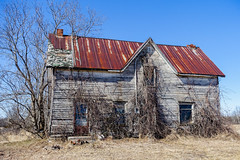 This Old House (gabi-h) Tags: tinroof oldhouse dilapidated architecture gabih princeedwardcounty vines backtonature forlorn sad ontario backroads earlyspring abandoned unoccupied