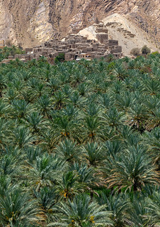 Old village in the middle of an oasis, Ad Dakhiliyah Governorate, Birkat Al Mouz, Oman