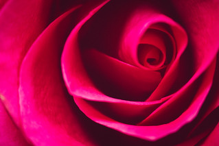 Rose all natural
