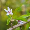 Flower #1 (Czayen) Tags: helios 442 582 flower macro dmcgx8