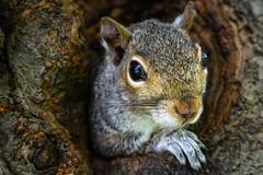 DSC_4582 (Stacey Conrad) Tags: d7500 millersville millersvilleuniversity nikon pa squirrel tree