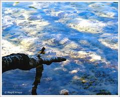 Krumme Lanke Birkenstamm im Wasser (magritknapp) Tags: 7dwf landscape birkenstamm spiegelung see wasser birchtrunk reflection lake water troncdebouleau réflexion de leau du lac troncodeabedul reflejando el agua del lago reflexão tronco bétula troncodibetulla riflessione acqua di berkenstam reflectie meer 335000 birkstam reflektion vatten birken stem søvand pieńbrzozy refleksyjna woda jeziora wodnego reflexion