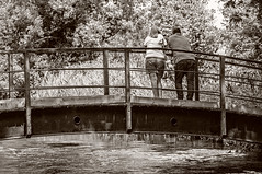 watching the trout (HHH Honey) Tags: sonyα55 minolta minolta100mmf28macrolens mottisfont hampshire nationaltrust river rivertest landscape blackwhite bw trees bridge