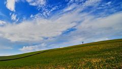 Seul au monde (Fabrice1965) Tags: suisse cantondevd arbre nuages seul nikon d750 samyang14mm