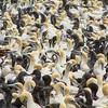 Cape Gannets (Morus capensis) (rjmiller1807) Tags: gannets capegannets moruscapensis sonydsch300 sonycybershot sony birds avian birdisland lambertsbay westerncape southafrica february 2018 chicks juvenile amazing colony