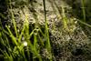 forest series #57 (Stefan A. Schmidt) Tags: warstein nordrheinwestfalen deutschland de smcpentaxda35mmf28macrolimited closeup macro tropfen gras wald licht pentaxart