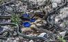 Watering Hole (Lotterhand) Tags: narcisse snake den redsided garter manitoba mark lotterhand sara horwitz
