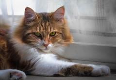 All fluff n' feet (martinblack18) Tags: cat chat fluffy