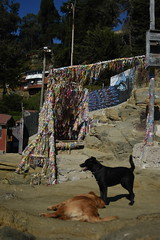 Fela no se cansa de jugar (photo du chaleins) Tags: animal perro dog mascota amigo nikon nikon3400 nikonista zenit zenit2870mm outdoor chile horcón turismo turism travel viaje