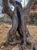 Unique tree (kevin dooley) Tags: unique tree