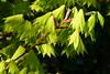 Leaves (evisdotter) Tags: leaves löv light macro sooc colors spring