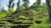 Tüfels Chilen (Swissrock-II) Tags: tüfelschilen zürichoberland natur nature naturgebilde tuffstein schweiz switzerland may 2018 mobile samsung moos wald forest