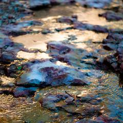 In Canyons 235 (noahbw) Tags: brycecanyon d5000 dof nikon utah abstract autumn blur depthoffield desert erosion landscape light natural noahbw quiet reflection rock square still stillness stone stream sunlight water